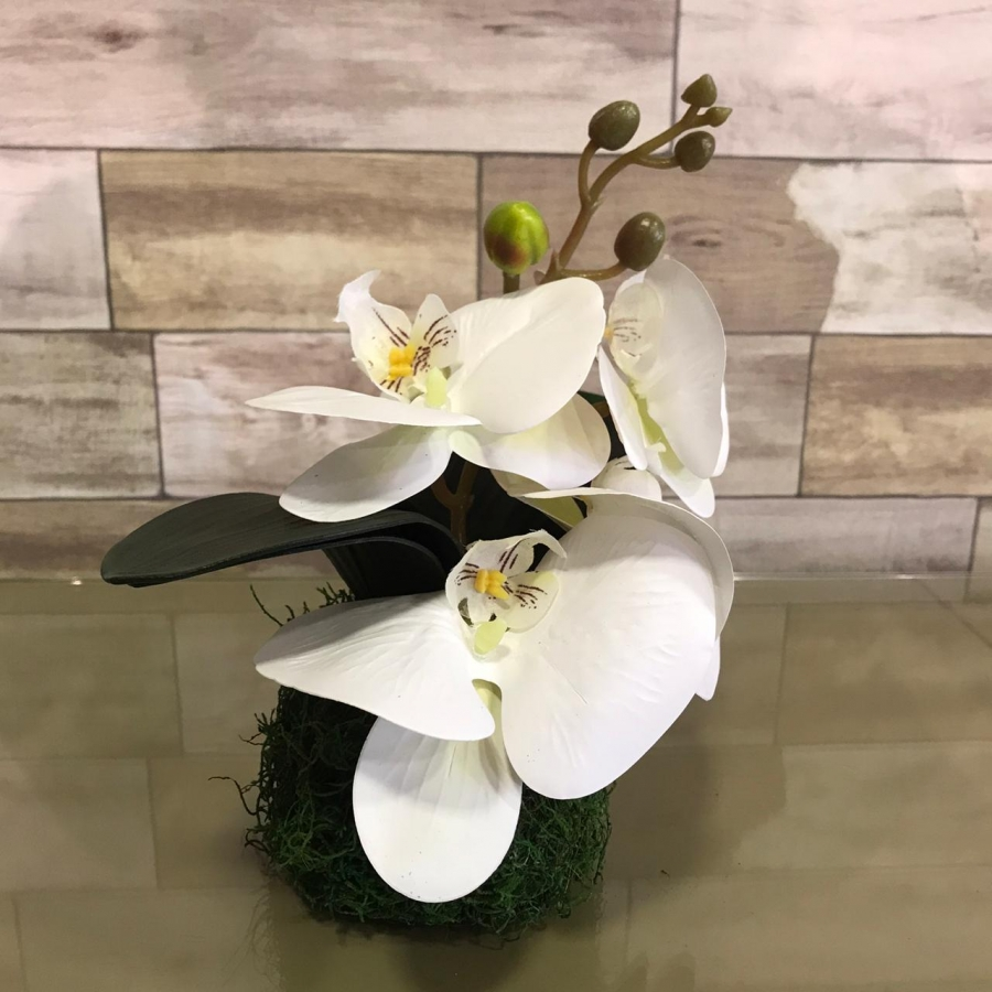 PP Mini Orquidea no Musgo Natural