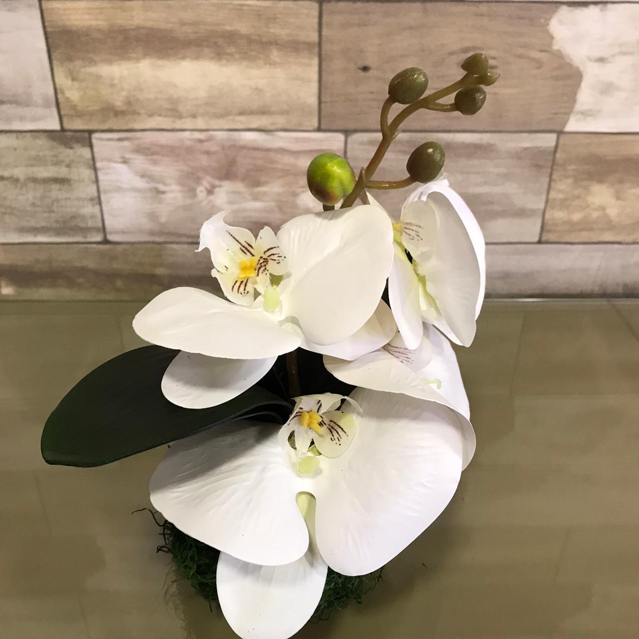 PP Mini Orquidea no Musgo Natural